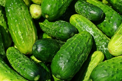 food-vegetables-Cucumber-cucumbers-plant-gourd-567067-wallhere.com