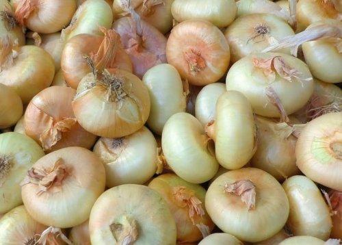 1 Cipolle-borrettane fresche