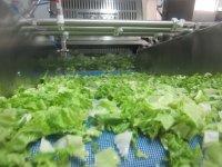 4 Washing Salad (Small)