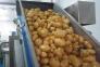 3 Input Potato