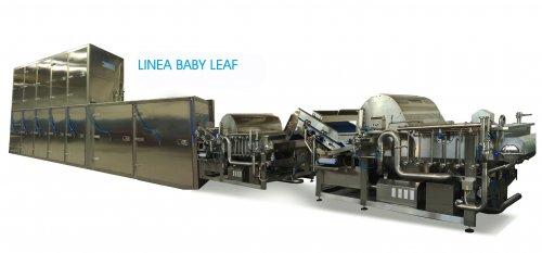 LINEA BABY LEAF